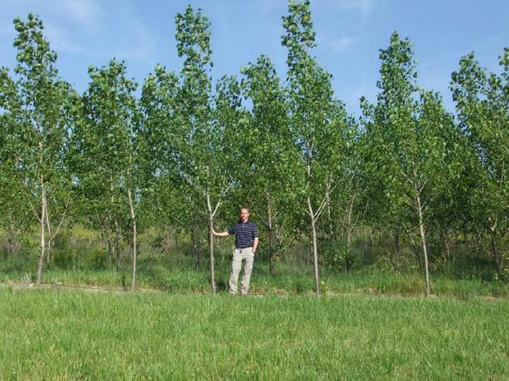 Phyto-Utilization Using Hybrid Poplar Trees