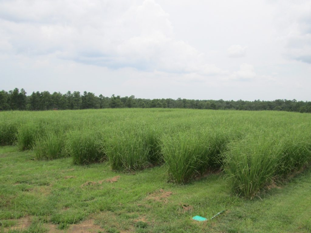 Phyto-Utilization Using Vetiver Grass